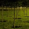 night-rhein-park-03